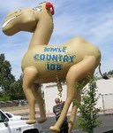 Camel helium inflatables - Radio Station balloon